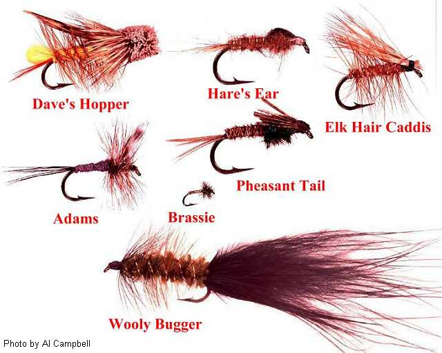 Test graphic for syb monthly fly for Best trout fishing near me