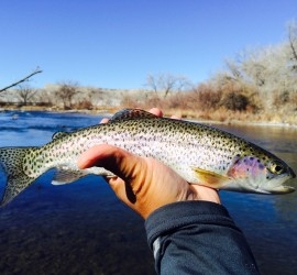 Trout are ready to eat- if you're willing to get 'close enough'!