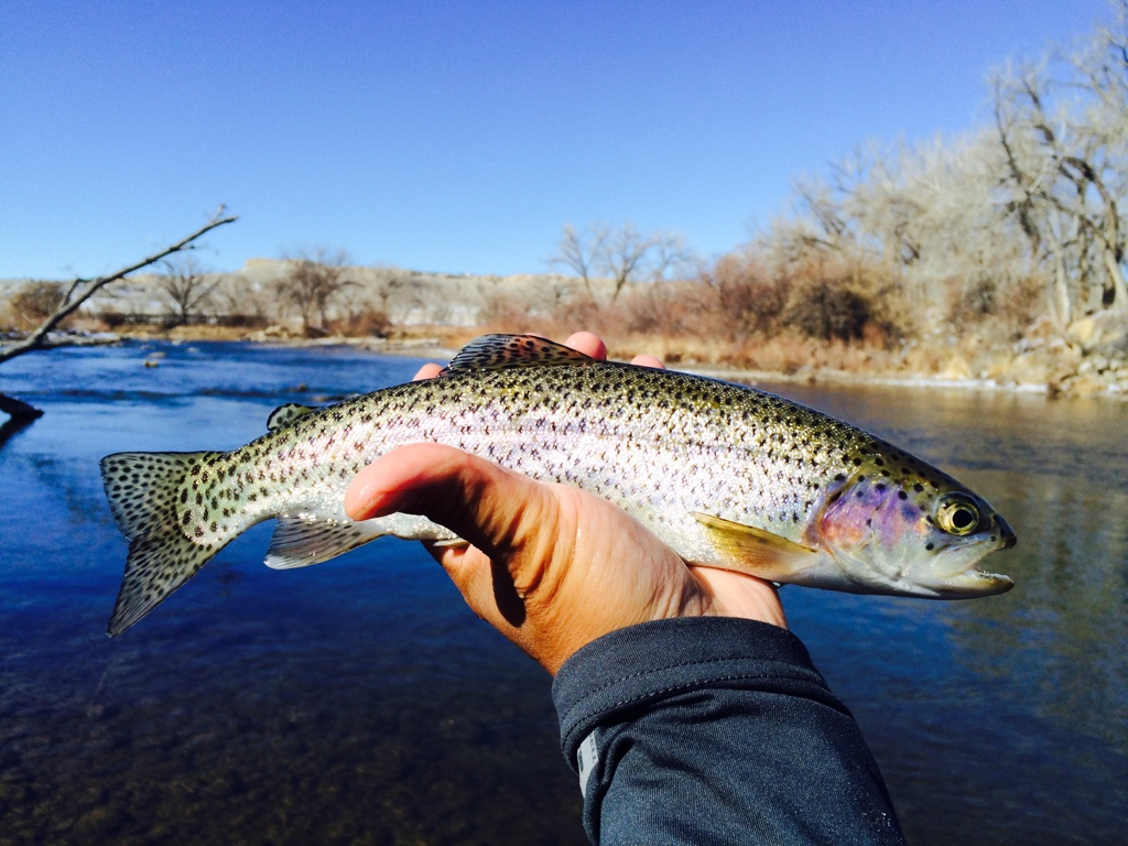 Trout Are Ready To Eat If Youre Willing Get Close Enough